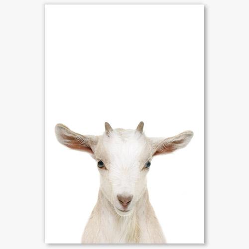 Tableau chèvre mouton 4 tableau chambre enfant bebe chevre animal